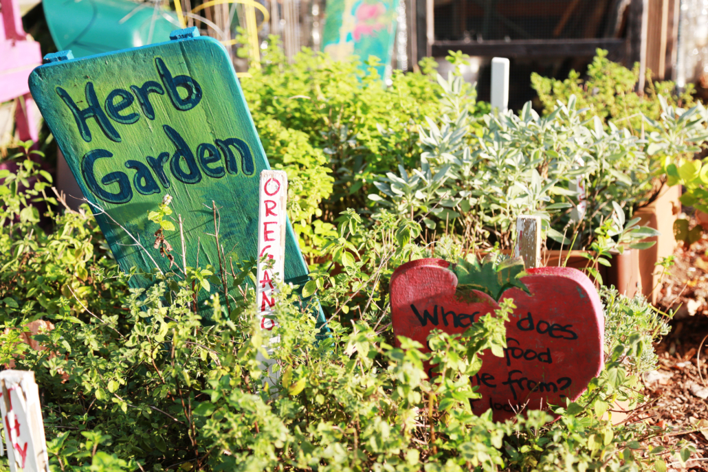 Stoddert Elementary School Garden Grown with Bloom