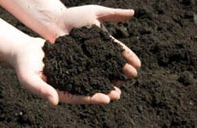 A handful of compost