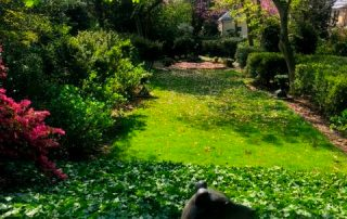 Tudor Place garden and dog statue